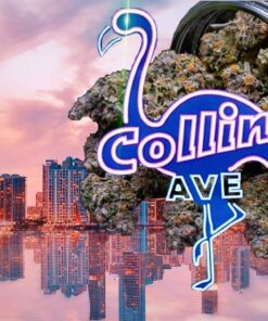 Buy Collins Ave Cookies Strain | Collins Ave Cookies Strain | Buy Collins Ave Cookies Strain Flower